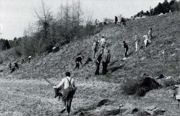 Hecke Dorfmatte 1993